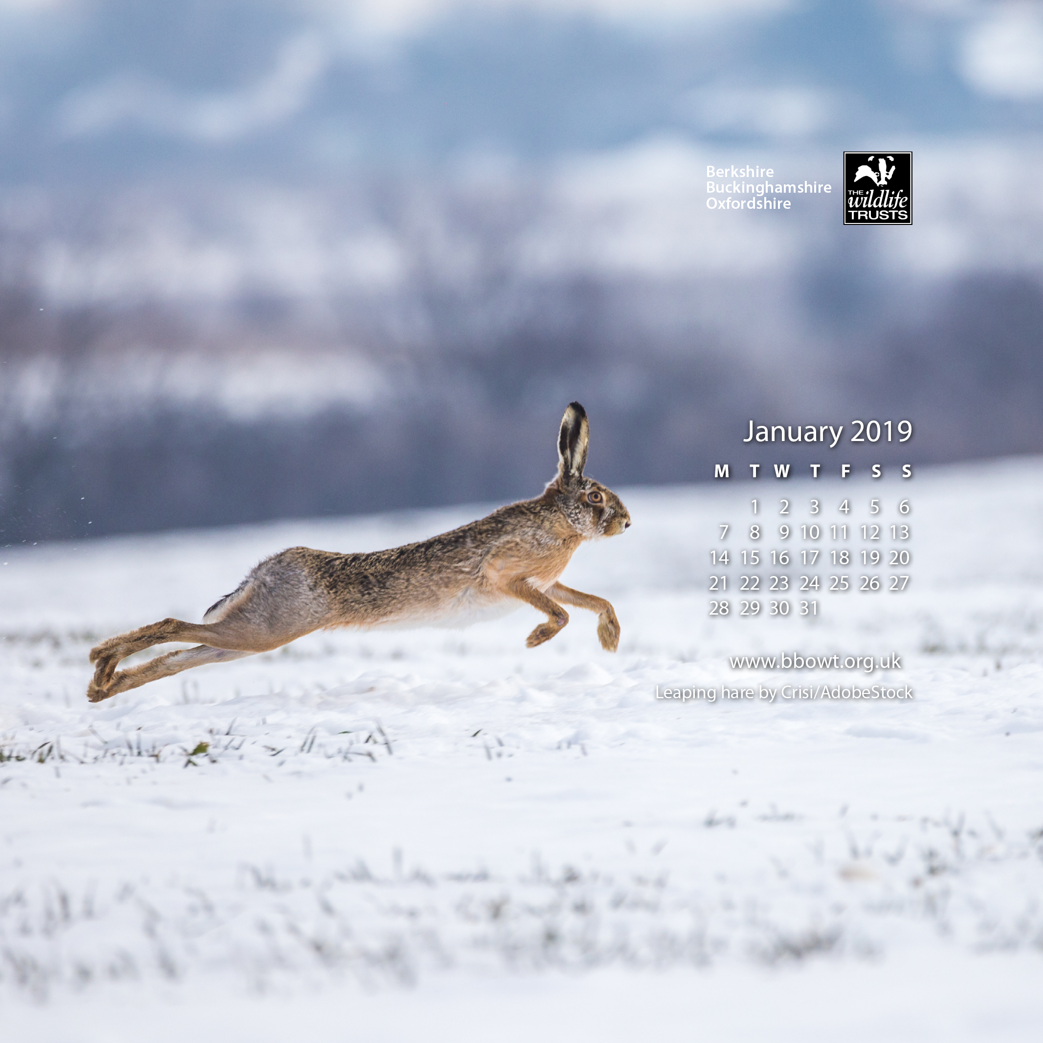 January wallpaper 1024 by 1024