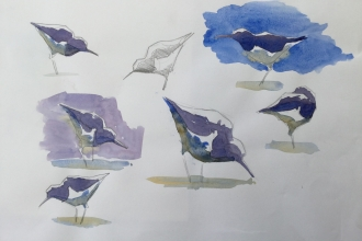 sketches of birds