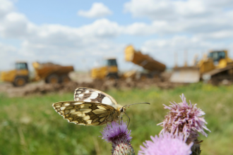 Marbled white and bulldozers