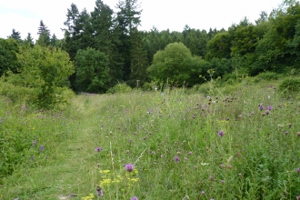 Homefield Wood with summer wild flowers