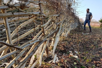 Boundary Brook Nature Park Hedgelaying