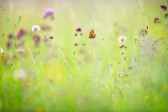 Butterfly in wild flower meadow