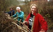 Volunteers hedgelaying