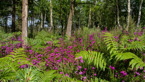 Bracken | Berks, Bucks & Oxon Wildlife Trust