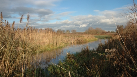 Cholsey Marsh