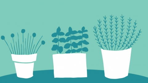 herb garden illustration