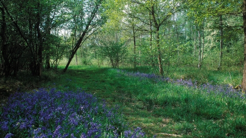 Rushbeds Wood