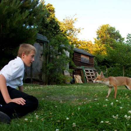 Boy and fox in garden