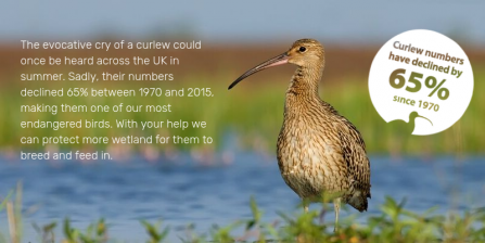 Graphic of showing curlew declines since 1970