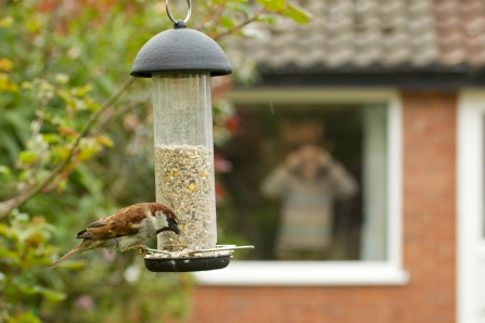 Man watching sparrow on bird feeder