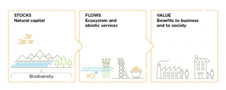 Diagram explaining natural capital and ecosystem services