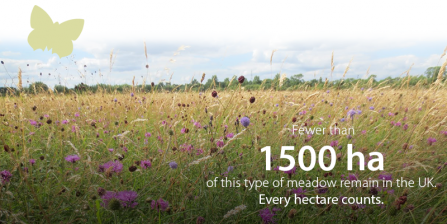 Fewer than 1500 hectares of this type of meadow remain in the UK