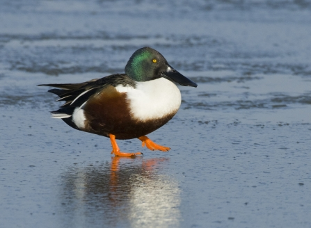 Shoveler by Bertie Gregory/2020Vision