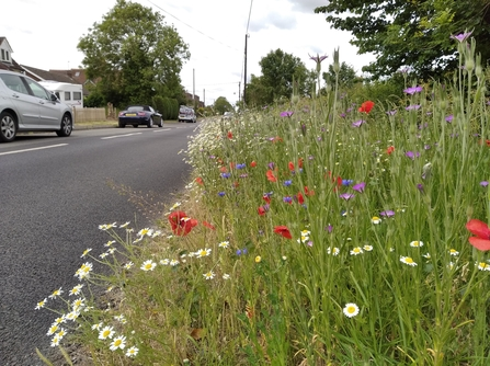 Wildflower verge in full bloom at Weedon