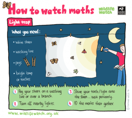 Moth watching activity sheet