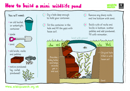 Mini wildlife pond activity sheet