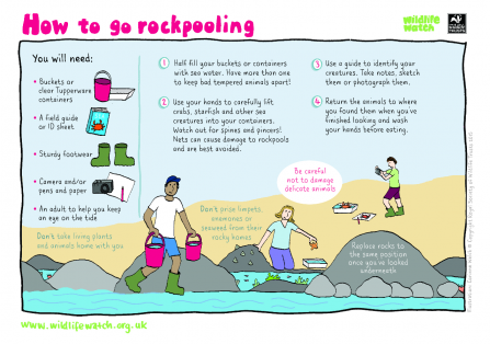 Rockpooling activity sheet