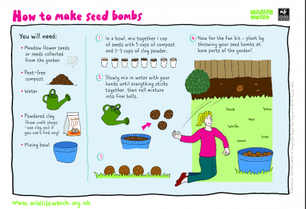 Seed bombs activity sheet