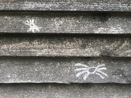 Two chalk spiders