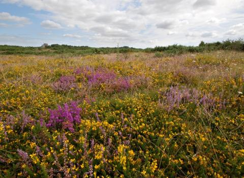 Greenham Common, West Berkshire Living Landscape, by Rob Appleby